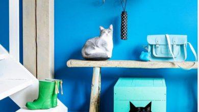 evde kedi tuvalet kutusunu koymak için yerler