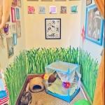 evcil hayvan odaları