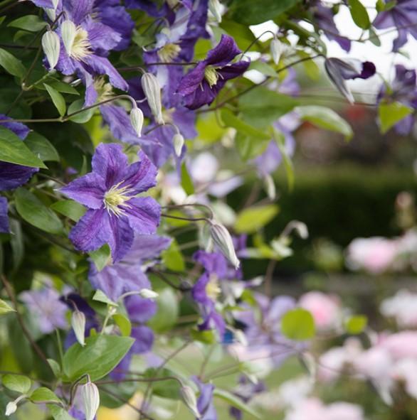 En Güzel Bahçe Çiçekleri 2018 2019
