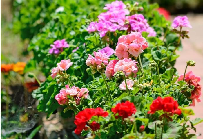 bahçe çiçekleri 2019