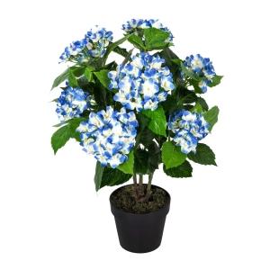 Mavi Ortanca Çiçeği